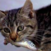 ネコの食物学